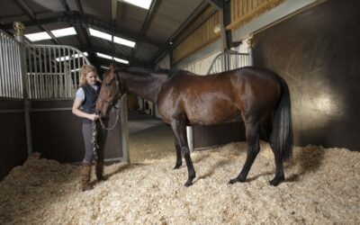 Bedding for BioSecurity in Your Stable